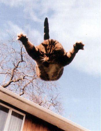 Полет кота
