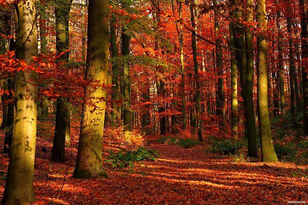 Картинки рабочего стола природа осень