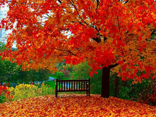 Осень - 21