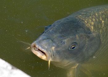 Рыба - подпарок